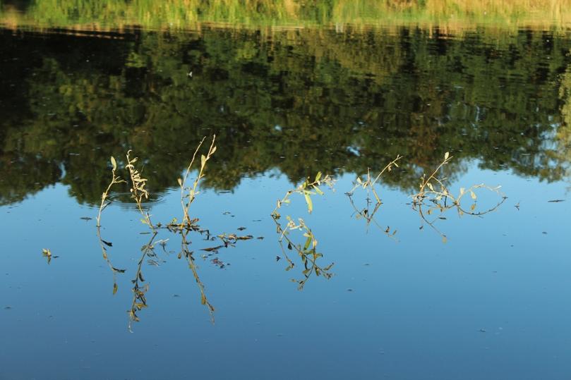 blog,animal,sensible,paysage,nature,eau,végétal,soleil,eau,feuilles
