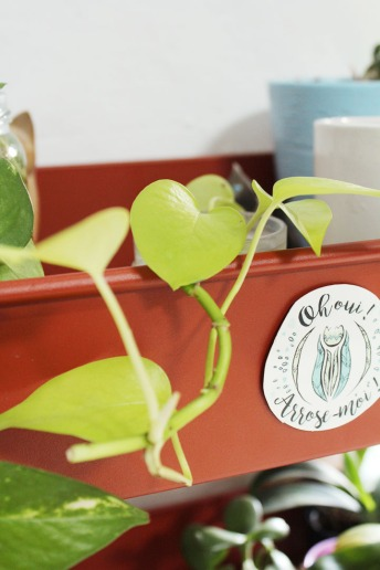animal,sensible,pothos,néon,plantes,jungle,green,blog,chouette