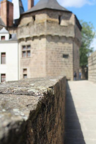animal,sensible,blog,château,ducs,nantes,vacances,bretagne,mur