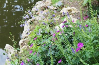 anima,sensible,blog,fleurs,jardin,plantes,nantes,vacances,rose,rochers