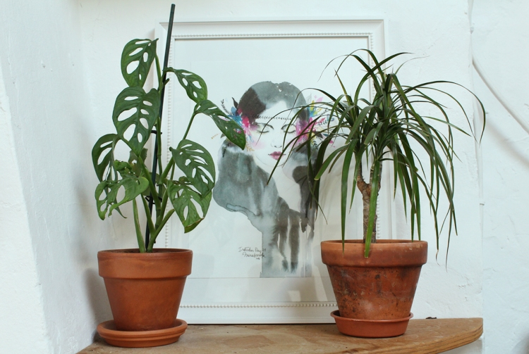 animal,sensible,blog,instagram,plant,tour,plante,jungle,urbaine,étagère,monstera,adansonii,dragonnier
