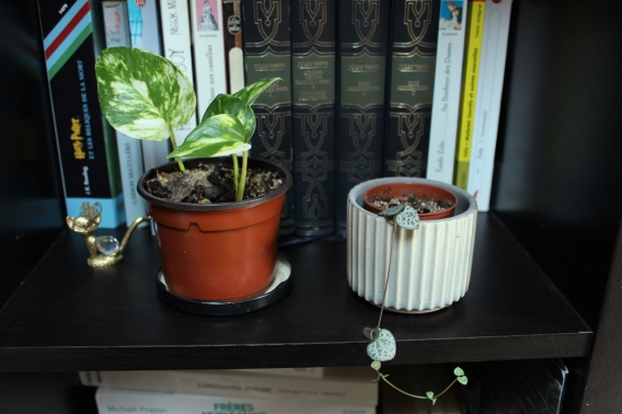 animal,sensible,blog,instagram,plant,tour,plante,jungle,urbaine,commode,pothos,chaîne,coeur