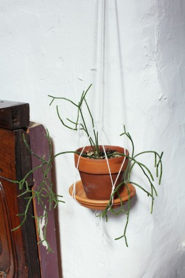animal,sensible,blog,instagram,suspension,rhipsalis,plante,diy